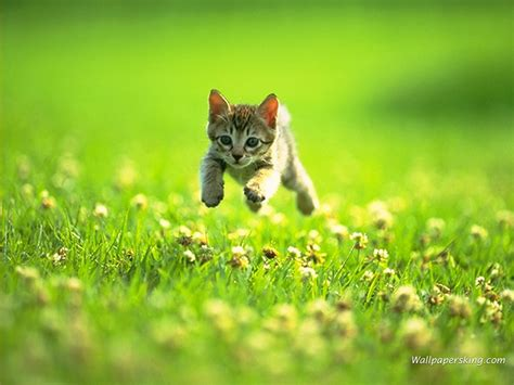 cat resistant wallpaper the kitten on a grass wallpapers and images wallpapers