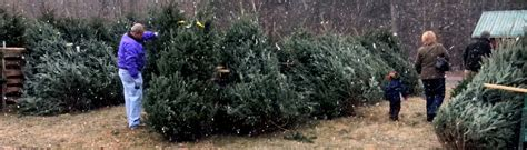 cut your own christmas tree albany ny cut your own tree in saratoga springs browse our four tree varieties ellm