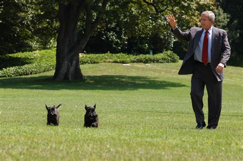 the best house dog see which dogs make the best white house guests