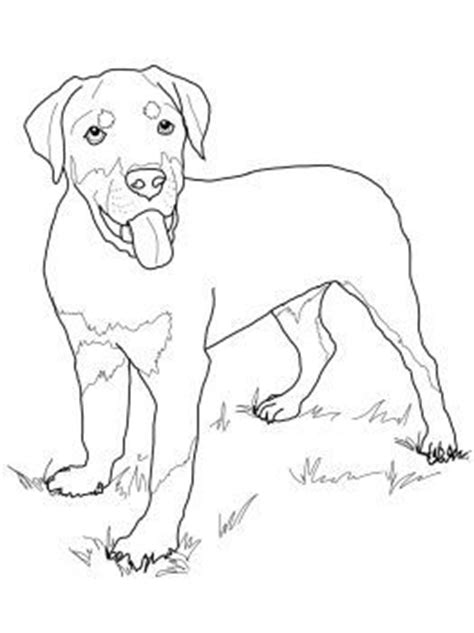 rottweiler coloring book 28 best images about dieren hd on pandas