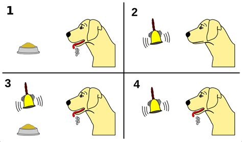 s dogs file pavlov s conditioning svg wikimedia commons