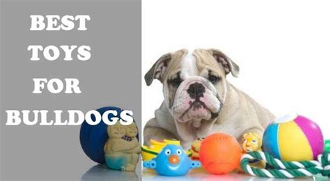 can dogs eat jicama alldogsworld