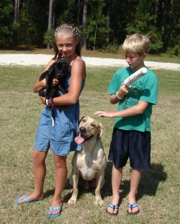labrador puppies for sale in ct area labrador retrievers for sale in stamford ct woodythurman comwoodythurman