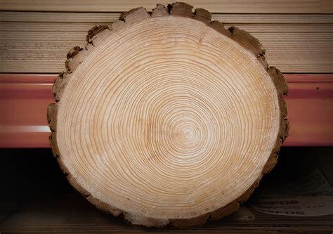 tree ring through the tree rings