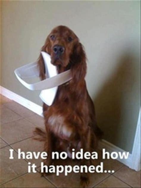 dumb dogs dumb dogs dump a day