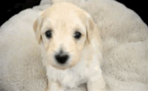 puppy throwing up and not vomiting yellow and not how to a puppy to walk on a leash