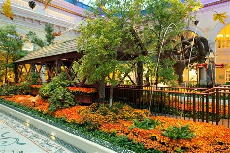 Botanical Gardens Bellagio by Fall Into Autumn At Bellagio S Conservatory Botanical