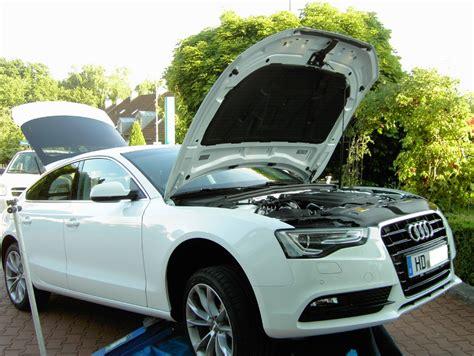 Audi Marderschutz by Auto Marderschutz Marderschutz Audi