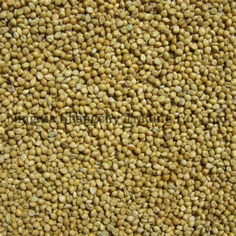 hulled foxtail millet products china hulled foxtail millet
