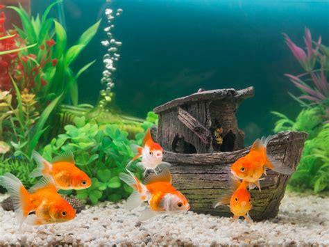 decoracion acuario c 243 mo decorar un acuario
