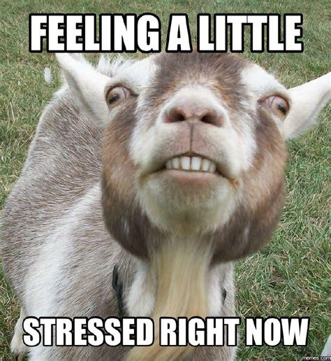 Stressed Out Memes - home memes com
