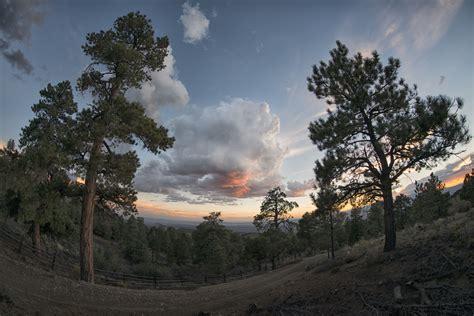 Lu Taman Sinar Matahari gambar pemandangan pohon alam hutan horison gurun