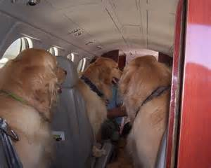 itchmo news for dogs cats 187 archive 187 air canada