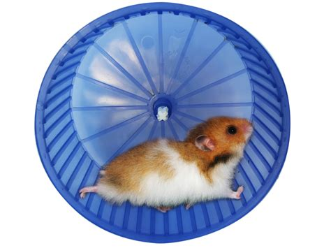 Wheel Hamster Kincir Hamster Mainan Hamster get fit 30 days to melt your winter waistline and tips