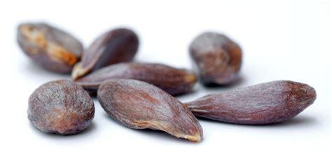 with seed file apple seeds variety braeburn aka jpg