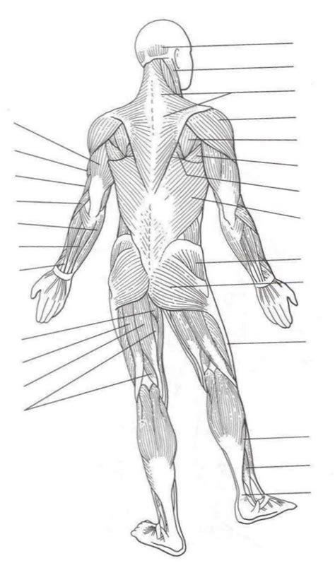cavities diagram quiz muscles of the quiz regions cavities