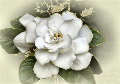 Gardenia Quality Gardenia Enfleurage 2ml High Quality 28 Images High
