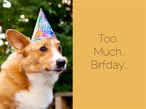 Corgi Birthday Meme - corgi birthday meme memes