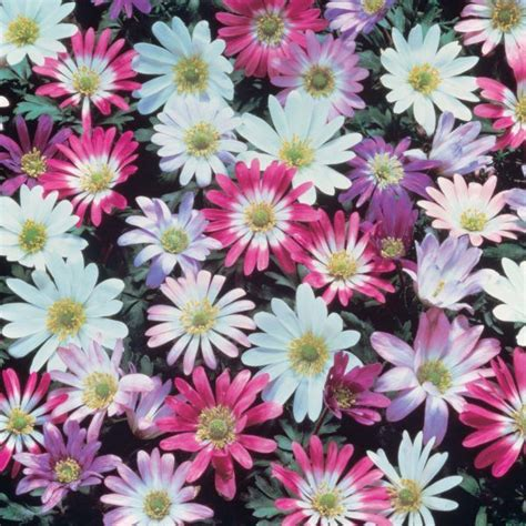 cuales son las plantas con flores