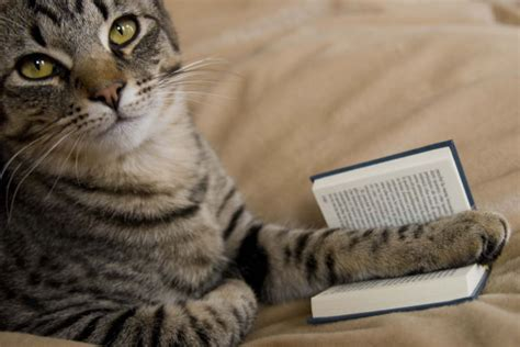 cat picture book cats also enjoy reading books 18 pics 1 gif picture