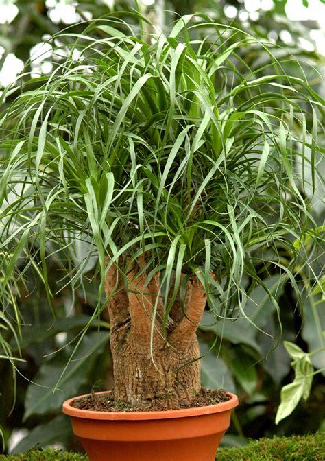 Ordinaire Plante D Interieur Facile D Entretien #5: mainImage-source-11517933.jpg