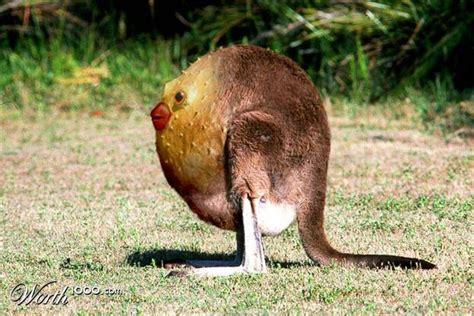 Boneka Grassland By Elie Gallery 95 best animal mashups images on animals