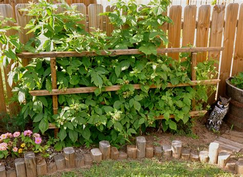 Strawberry Trellis Before And After Dirtshoe Blog
