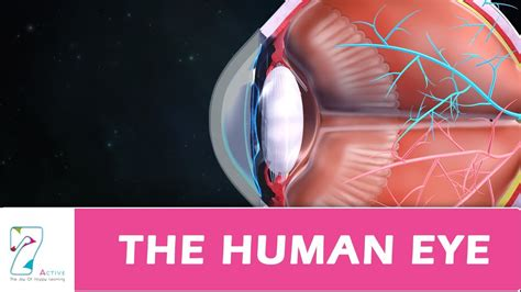 the ey exibition the human eye youtube