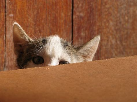new cat hiding under bed free stock photos rgbstock free stock images shy