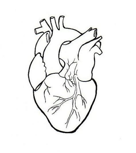 realistic heart coloring page human heart embroidery anatomical line art simple