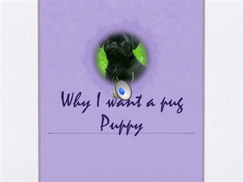 i want a pug puppy ppt why i want a pug puppy powerpoint presentation id 2586656