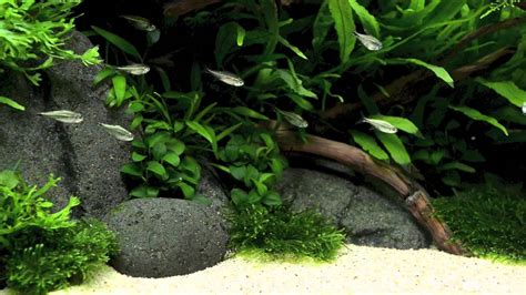 Aquascaping Ada by Ada Style Aquascape 5 Months