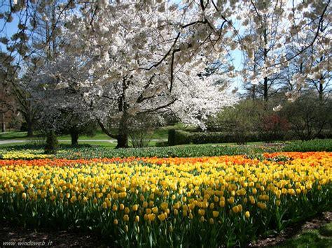 giardini in fiore foto foto giardini gratis per sfondi desktop