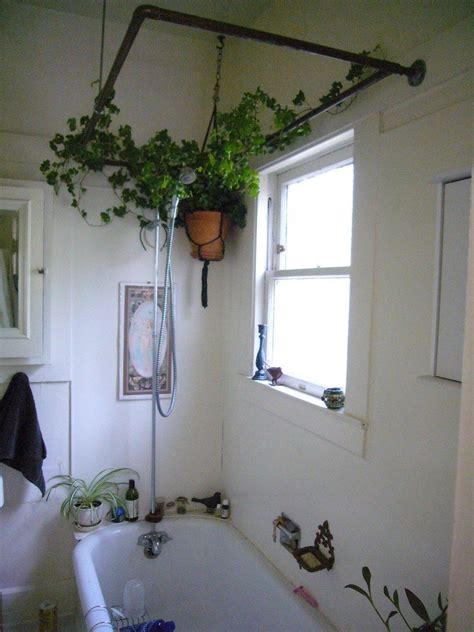 Plants For Bathroom With No Windows | bathroom plants learn about the best plants for a bathroom