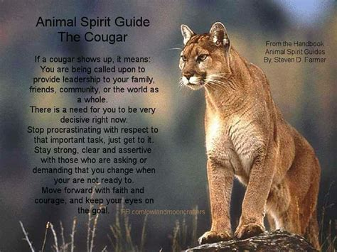 test animale guida animal spirit guide search engine at search