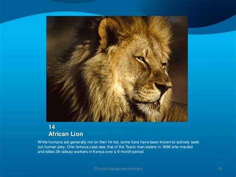 Animal Planet World S Most Dangerous Animals the 25 most dangerous animals on the planet