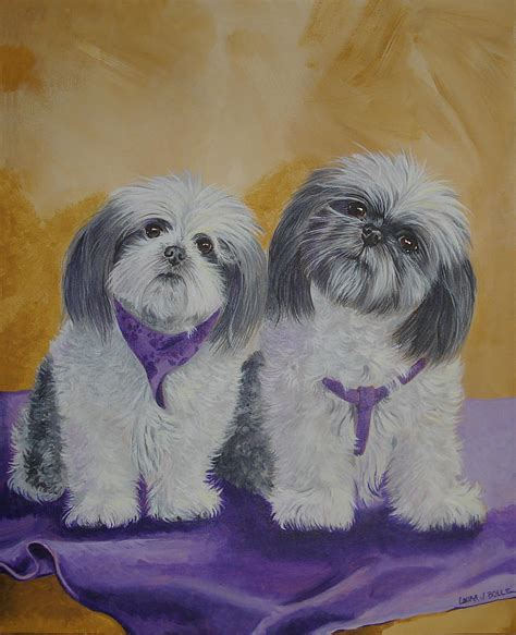 shih tzu paintings shih tzus by bolle shih tzus painting shih tzus