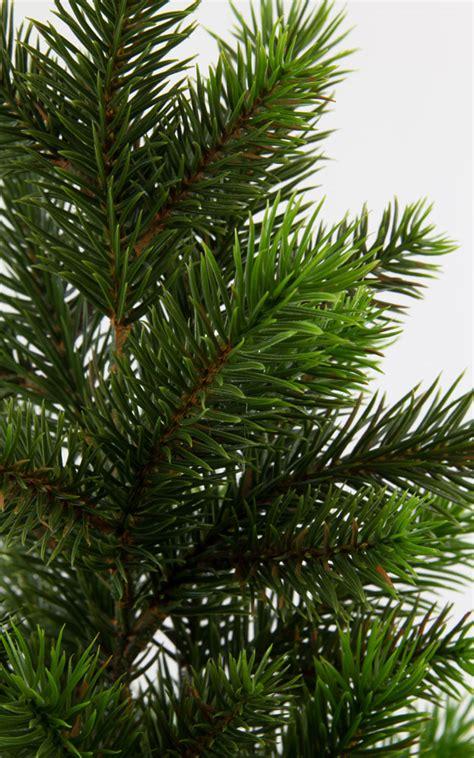 wann tannenbaum kaufen k 252 nstliche tannenbaum my