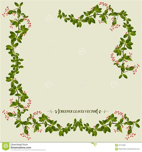 creepers fiori border of creeper flower plant stock vector illustration