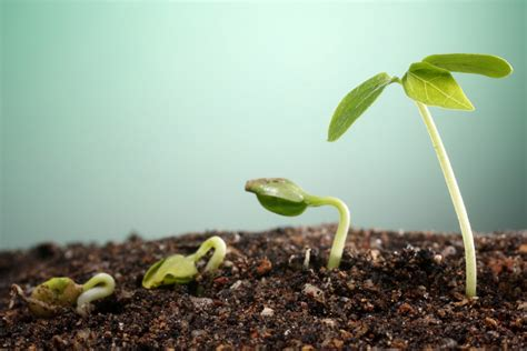 Di Grow personal growth essential to dental practice growth
