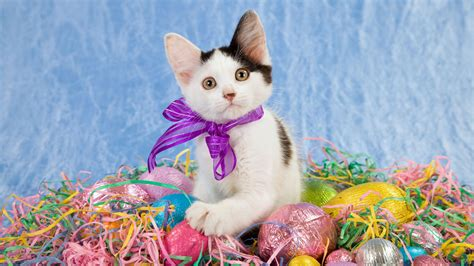 cat easter wallpaper kitten of eggs for easter wallpapers and images