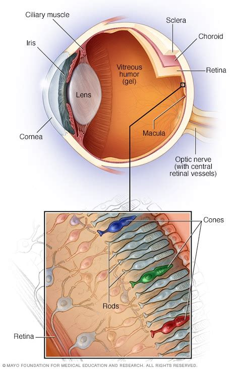 light in peripheral vision mayo clinic macular degeneration symptoms and causes mayo clinic