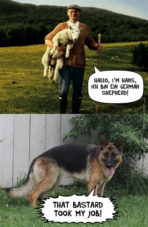 Funny German Shepherd Memes - german memes best collection of funny german pictures