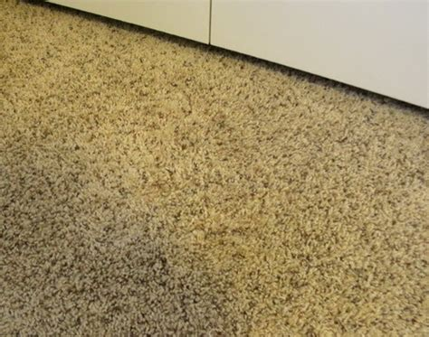 how to fix a burnt rug how to fix a carpet burn caused by an iron easy diy repair us2