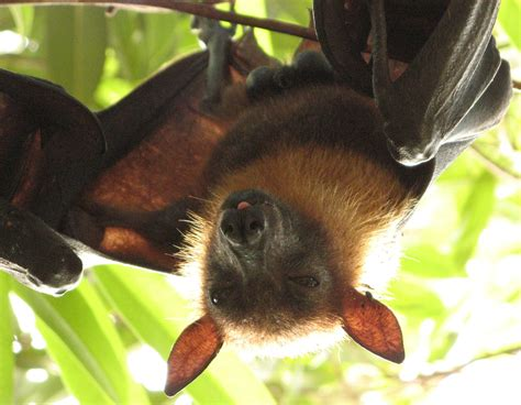 a fruit bat stop fruit bat trade forcechange