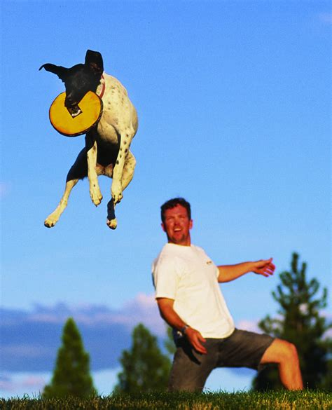 best frisbee dogexplorer launches world s best flying disc picture contest