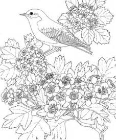 eastern bluebird coloring page eastern bluebird and hawthorn missouri state bird and