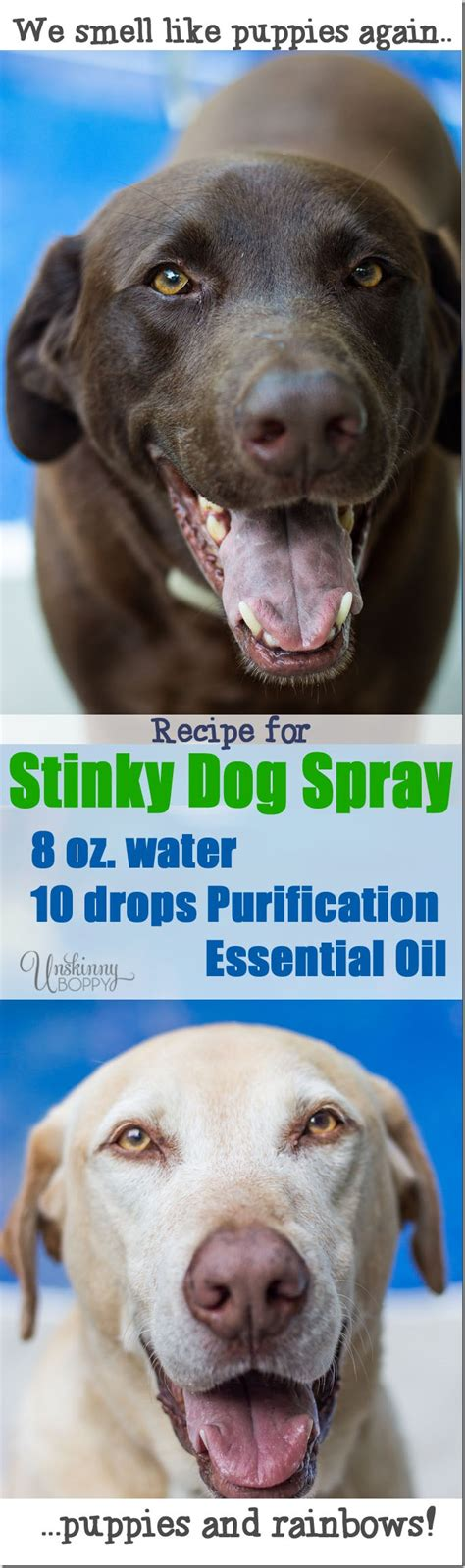 recipe for good smelling dog shoo how to get rid of that stinky dog smell unskinny boppy