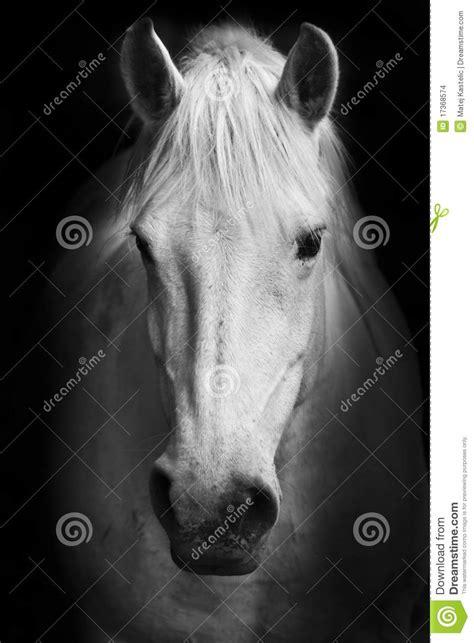 imagenes a blanco y negro de caballos ojo del caballo blanco retrato blanco y negro del arte