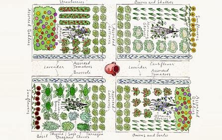 Image Gallery Large Vegetable Garden Layout Large Vegetable Garden Layout